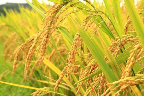 ayurvedic diet for weight loss & fiber information